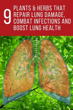 9 Plants & Herbs that Repair Lung Damage, Combat Infections and Boost Lung Health
