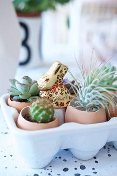 DIY Osterdeko für den Osterbrunch mit Sukkulenten in Eierschalen. Auch ein tolles Geschenk zu Ostern.