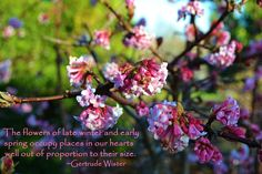 The flowers of late winter and early spring occupy places in our hearts well out of proportion to their size.