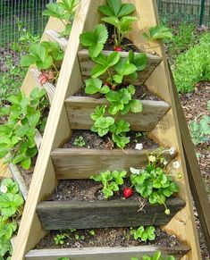Pyramid strawberry tower. I want to make this & use it for my herb garden!