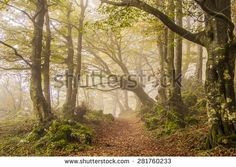 Autumn in thee beech forest of Monte Cucco with fot - Umbria, Italy. #MonteCucco #Umbria #Italy  #Fog #Misty #Beech #Halloween #Park #Nature #Horror #Path