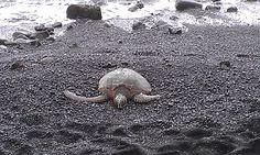 quiero ir a ver a las tortuguitas
