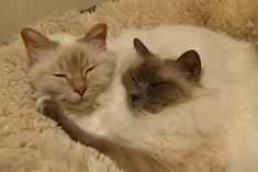 Bijoux and Daisey