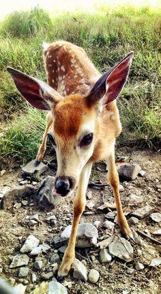 Little Baby Deer - So Sweet & Shy