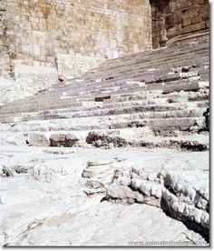 """Jerusalem; """" I walked today where Jesus walked, and felt his presence there"""" The Southern steps of the temple mount where Jesus walked to the temple"""