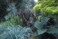 Mesogeo Nursery Garden, Bainbridge Island by terrymoyemont, Image Via:  Flickr