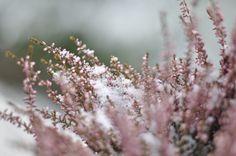 #winter #flowers