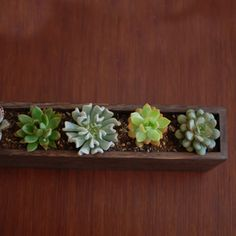 these plants are pretty cheap and probably not that easy for me to kill.  this would look cute in my bathroom i think.