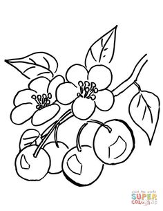 branch-of-cherry-tree-coloring-page.jpg (612×792)