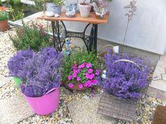 levendula Planter Pots, Plants, Gardening, Lawn And Garden, Flora, Plant, Plant Pots, Horticulture, Square Foot Gardening