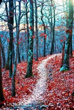 .We want to make trails like this one behind our house.....beautiful!