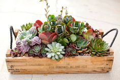 Simply Succulent Plant Designs- Los Angeles, Orange County