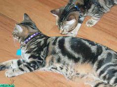 Las familias felinas tienen una estructura jerárquica?
