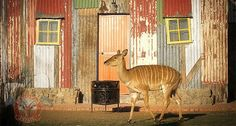 Located near Bloemfontein in South Africa, the shanty town themed luxury resort operated by Emoya Luxury Hotel and Spa looks like a slum. African Vacation, The Shanty, Stone Masonry, Leading Hotels, Slums, Fancy, Farm Animals, Concept, Architecture