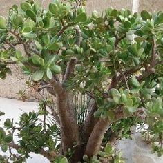 conseils pour bien entretenir les plantes grasses plantes pinterest pelouses. Black Bedroom Furniture Sets. Home Design Ideas