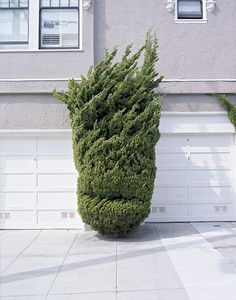 I had a similar one and I named it Don King.  Is is weird to name your plants?