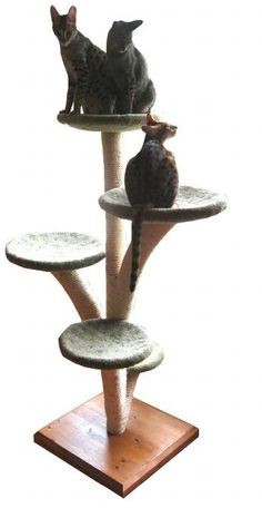 Home - Cloud Nine Cat Trees (Custom-made cat trees)