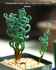 Strangest Plant On Earth
