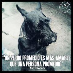 Si tienes un animal, trátalo bien porque si lo haces el ara lo imposible para protegerte, animarte o cuidarte.