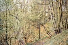 Franz Gerscht - Frühling