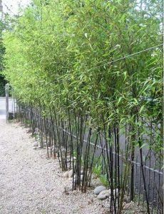 Bamboo Garden Ideas Backyards_43