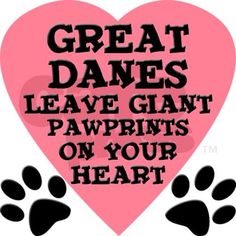 Cafe Pets: Great Dane Pawprints Throw Pillow: Great Danes leave giant pawprints on your heart t-shirts and gifts. This funny saying is an inexpensive gift for a Great Dane lover. Check out all our humorous Great Dane t-shirts and gifts. Great Dane Dogs, I Love Dogs, Puppy Love, Cute Dogs, Weimaraner, Dane Puppies, Doggies, Blue Great Danes, Gentle Giant
