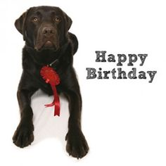 Chocolate Labrador Happy Birthday Card - RSPCA