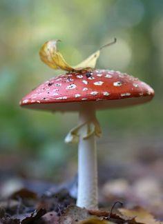 Fairy tale mushroom.  The Murmuring Cottage