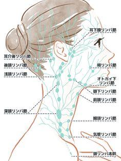 顔のリンパの流れを図で理解!すっきりマッサージの方法   大人のスキンケア教室 Qigong, Fairy Garden Pots, Acupressure Therapy, Beauty Habits, Face Massage, Health And Beauty Tips, How To Make Hair, Face Skin, Body Care