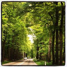 Road from Maarsbergen to Leersum, spring