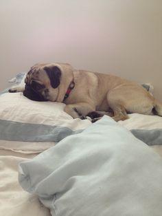 Bugthepug. Pondering the pug life.