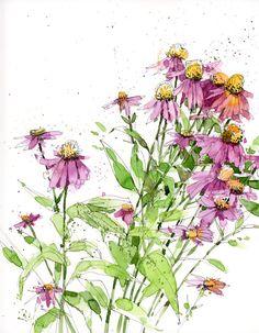 Echinacia
