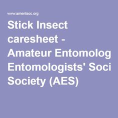 Stick Insect caresheet - Amateur Entomologists' Society (AES)