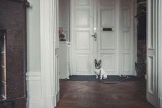 Denjo Dogs - Found My Animal Collar & Leash. Collar And Leash, Dog Leash, My Animal, Doge, Tall Cabinet Storage, French Bulldog, Interior, Home Decor, Animales