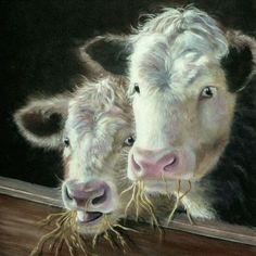Beautiful illustration of two Hereford Calves by Beverley Madley £1.99