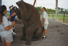 Many zoos and circuses today use inhumane techniques to train their elephants. One such technique involves using bullhooks - long sticks with sharp hooks on the end - which are used to poke and prod elephants in sensitive areas, such as around their mouth, eyes, ears, and anus, inflicting a great deal of pain. Demand that these brutal bullhooks be outlawed : http://forcechange.com/13290/outlaw-the-use-of-brutal-bullhooks-to-train-elephants/