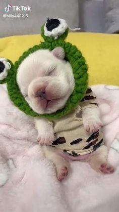 Cute Bulldog Puppies, Cute Teacup Puppies, Super Cute Puppies, Cute Baby Dogs, Cute Little Puppies, Super Cute Animals, Cute Dogs And Puppies, Cute Little Animals, Little Dogs
