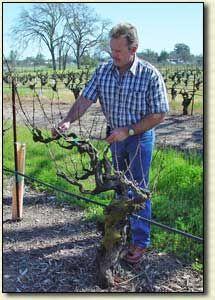Steve Ledson of Ledson Winery & Vineyards