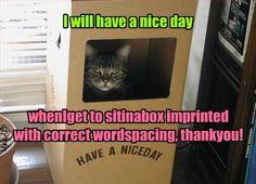 Meet Stet, the Editor's Cat