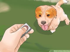Image titled Help a Blind Dog Step 17