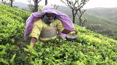 A great video made by FairTrade USA- Fair Trade Improving Lives #fairtrade