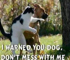 Taekwondo CAT!
