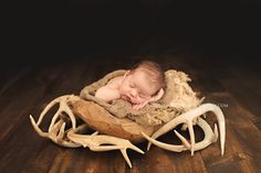 Newborn boy, newborn pose, newborn with deer antlers, deer antler set up, hunter newborn http://kerihamiltonphotography.com http://facebook.com/kerihamiltonphotography http://instagram.com/kerihamiltonphotography