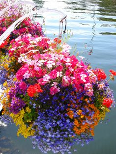 Hanging flower baskets,