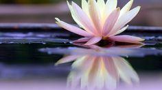 Ateliers de méditation Heartfulness - Heartfulness - Relaxation et méditation