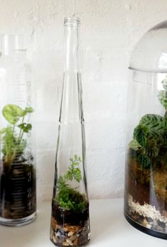 Galliano Bottle Terrarium by Little Lands