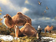 Giant camel fossil unearthed in the Arctic - http://www.sciencecut.com/2013/03/11/giant-camel-fossil-unearthed-in-the-arctic/