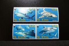 St.Kits Tiger Shark 2007