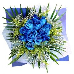 Looking for an imported blue rose send this Blue Danube One blue rose is captivating; 12 in one bouquet is enough to render a person awestruck and speechless.  Please visit and place your order in Regaloph http://regaloph.com