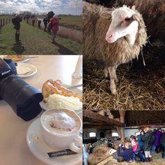 Fotowandeling Lammetjesdag @hollandsebiesbosch met Berceau Creative